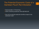the potential economic costs of a gambian pouch rat infestation