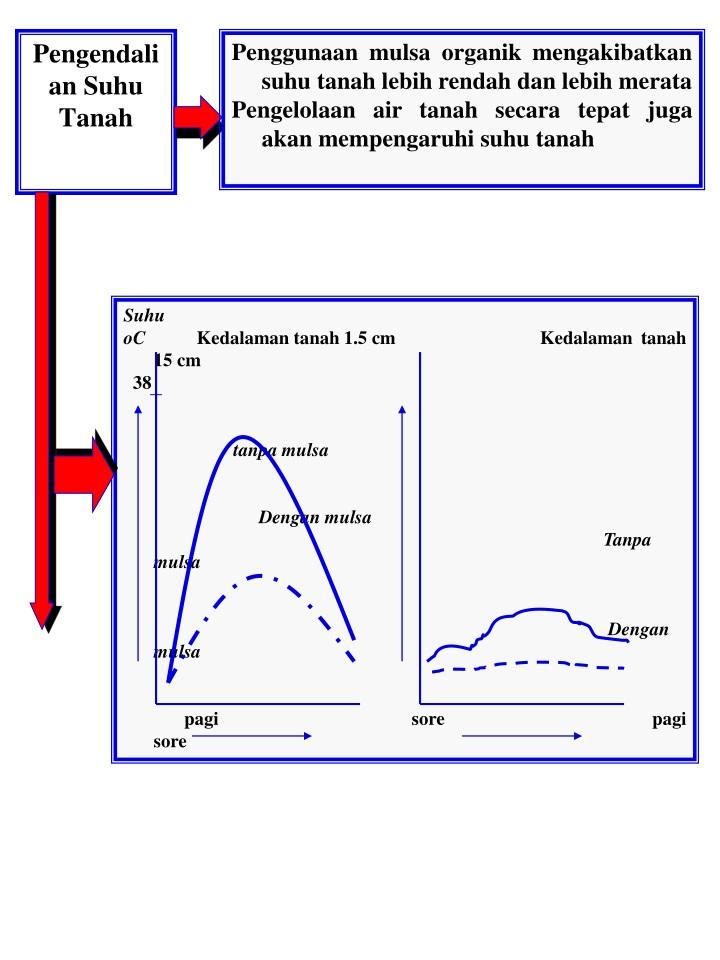 Penggunaan mulsa organik mengakibatkan suhu tanah lebih rendah dan lebih merata