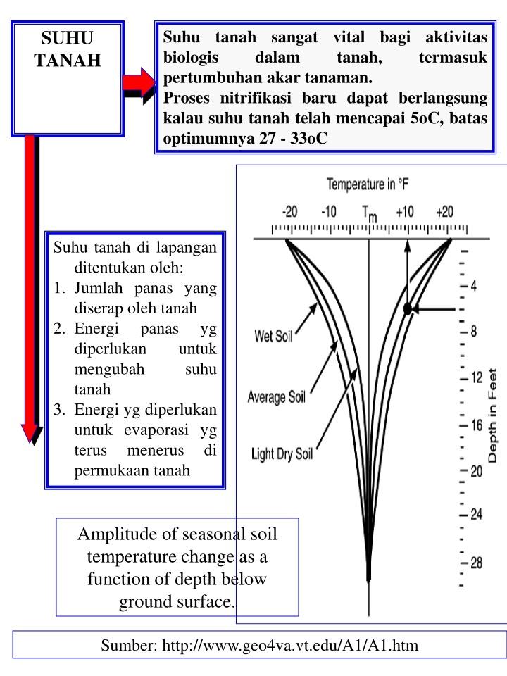 Suhu tanah sangat vital bagi aktivitas biologis dalam tanah, termasuk pertumbuhan akar tanaman.