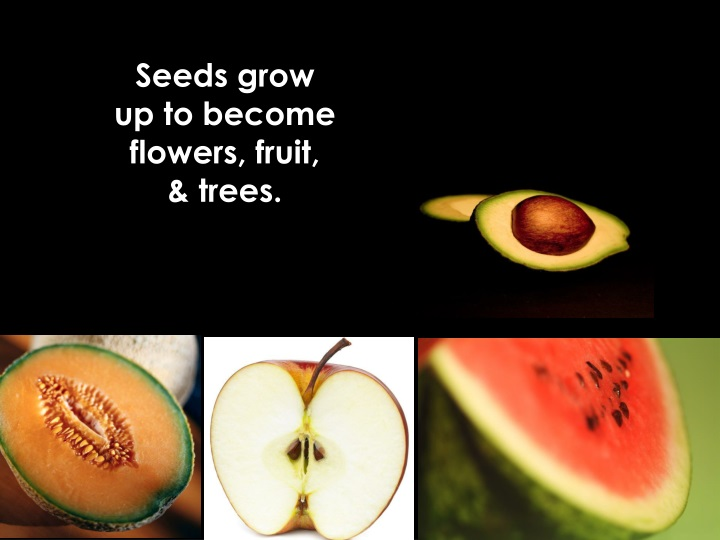 Seeds grow up to become flowers fruit trees