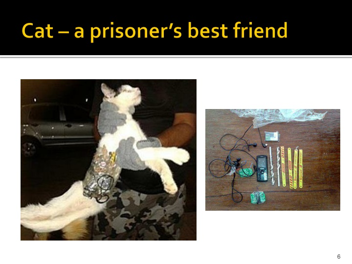 Cat – a prisoner's best friend