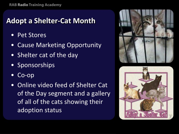 Adopt a Shelter-Cat Month