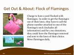 get out about flock of flamingos
