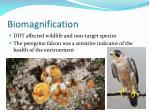 biomagnification3
