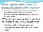 what happens to the carbon in plants and animals when they die