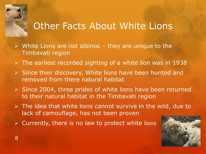 PPT - White Lions PowerPoint Presentation - ID:1523540