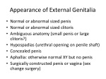 appearance of external genitalia