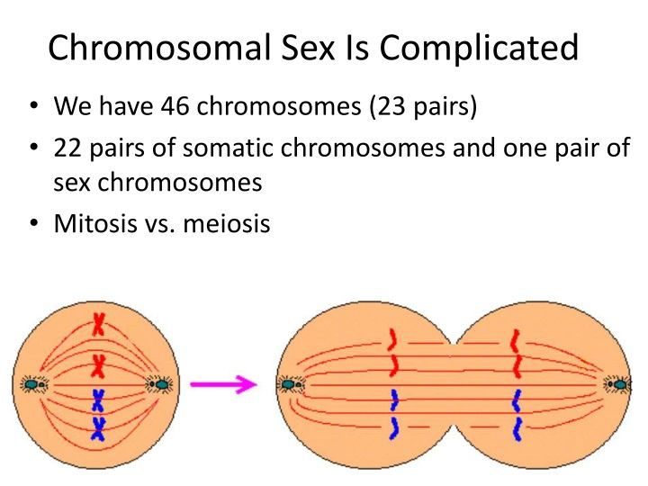 Chromosomal Sex Is Complicated