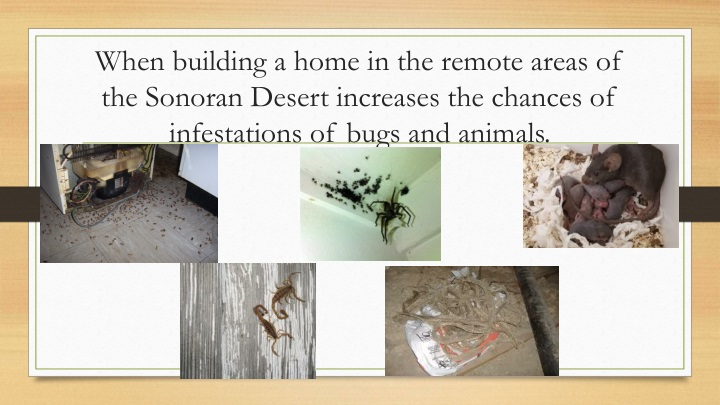 When building a home in the remote areas of the Sonoran Desert increases the chances of infestations of bugs and animals.