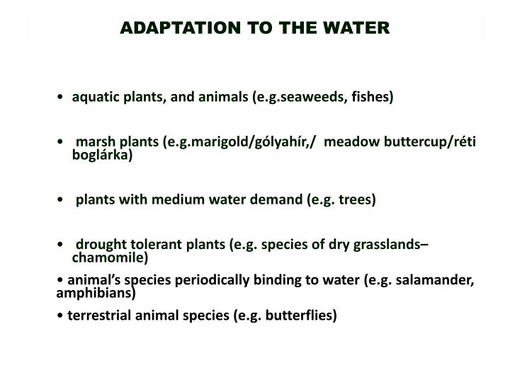 ADAPTATION TO THE WATER