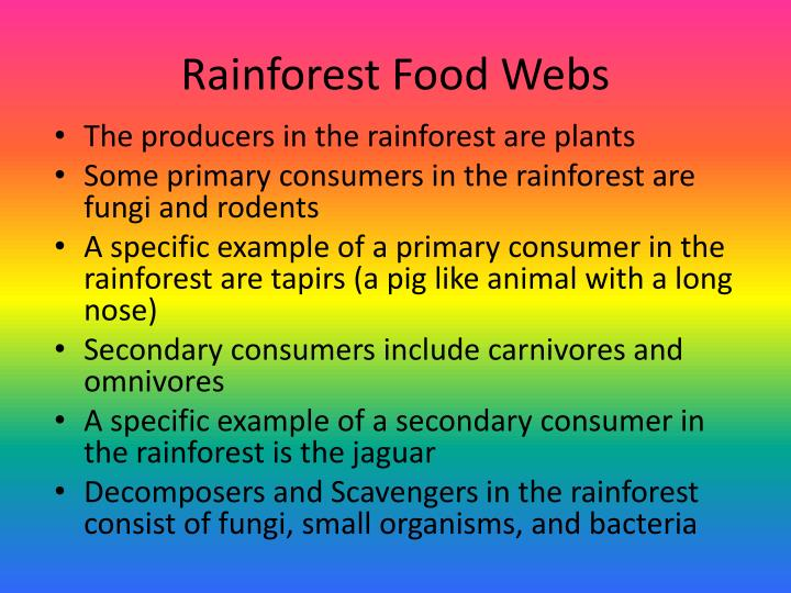 Rainforest Food Webs