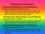 rainforest symbiosis
