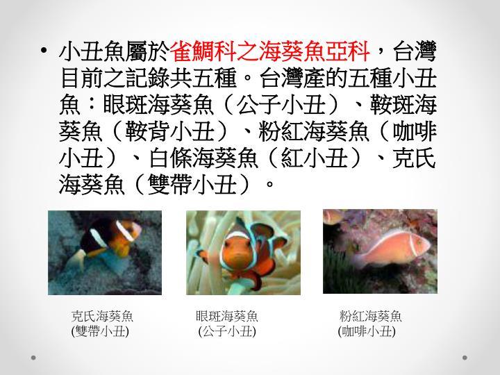 小丑魚屬於