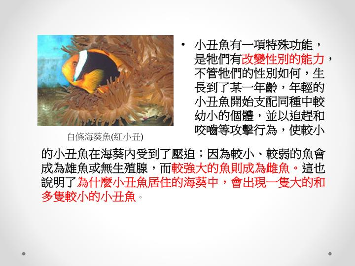 小丑魚有一項特殊功能,是牠們有