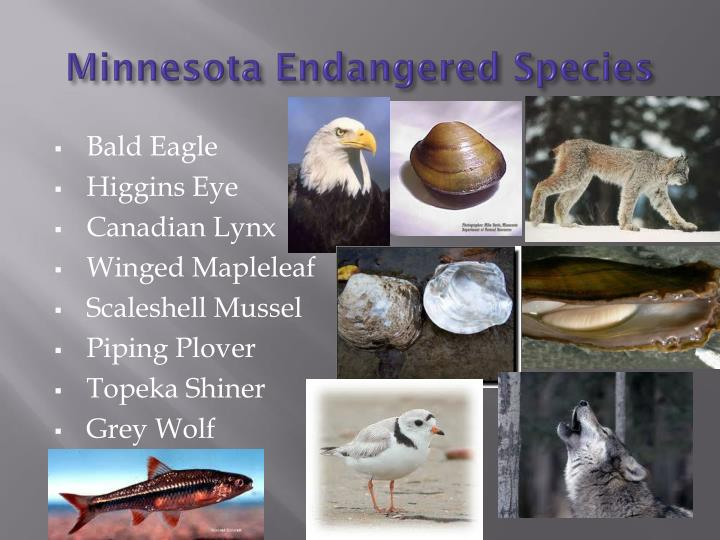 Minnesota Endangered Species