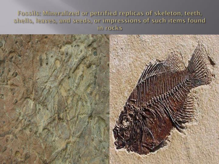 Fossils: Mineralized or petrified replicas of skeleton, teeth, shells, leaves, and seeds, or impressions of such items found in rocks
