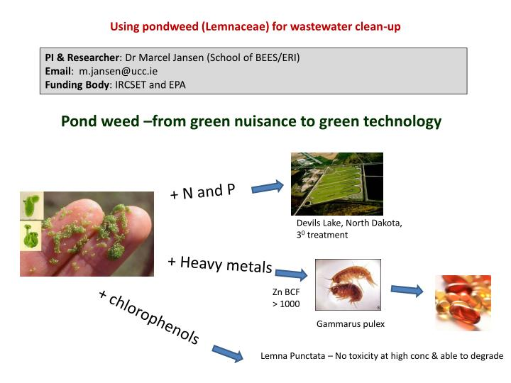 Using pondweed (Lemnaceae) for wastewater clean-up