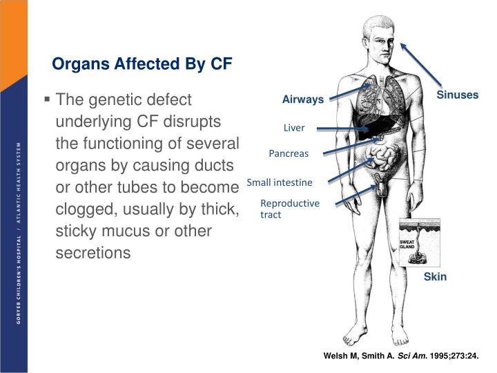Organs Affected By CF