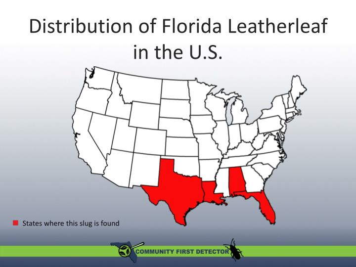Distribution of Florida Leatherleaf in the U.S.