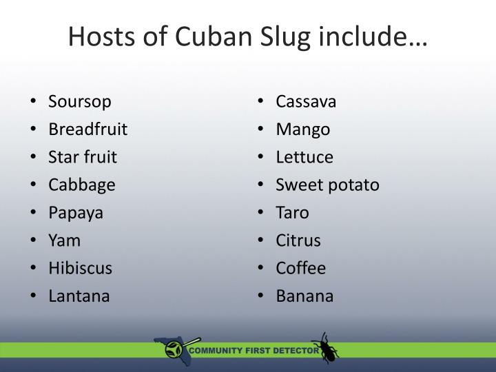 Hosts of Cuban Slug include…