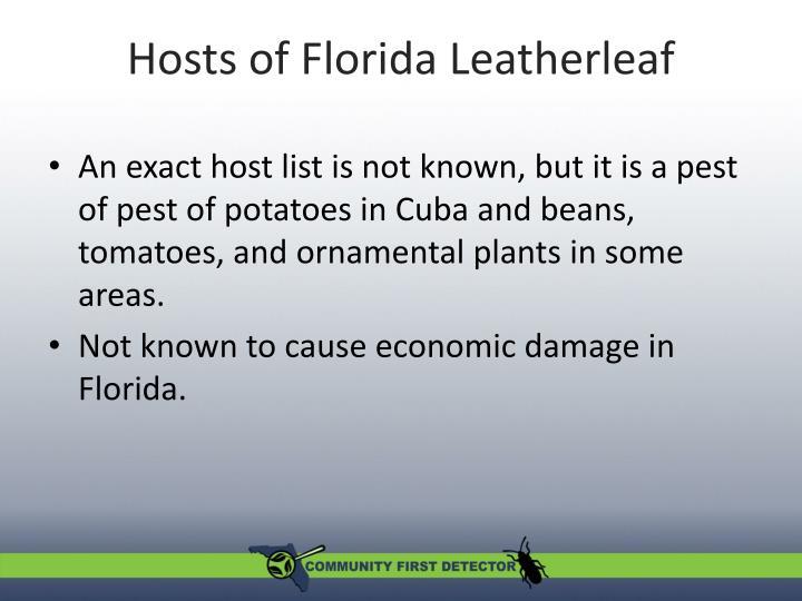 Hosts of Florida Leatherleaf