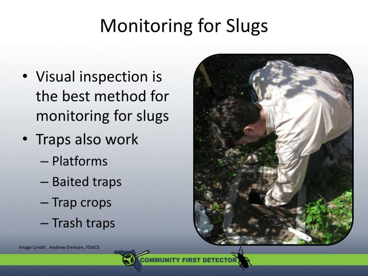 Monitoring for Slugs