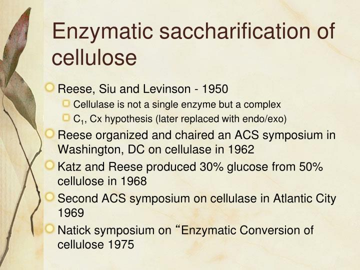 Enzymatic saccharification of cellulose