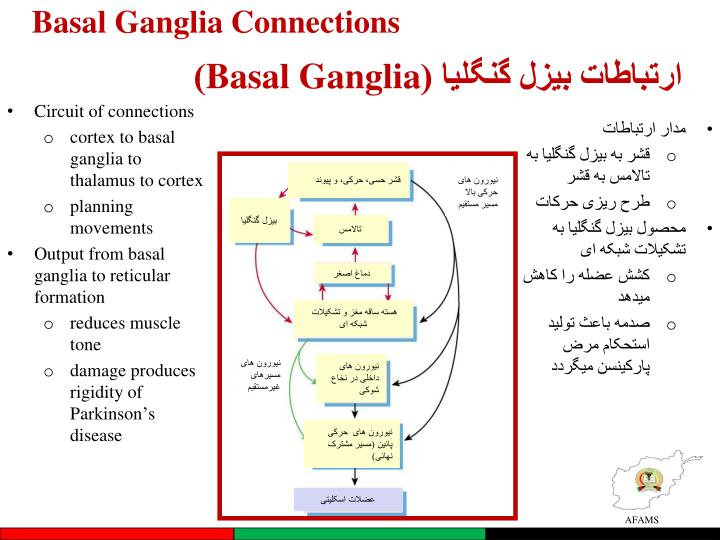 Basal Ganglia Connections