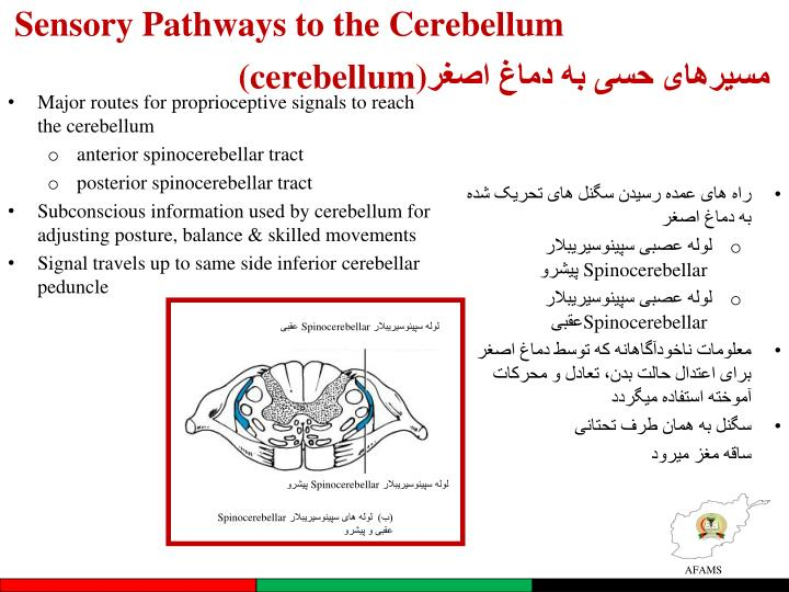 Sensory Pathways to the Cerebellum