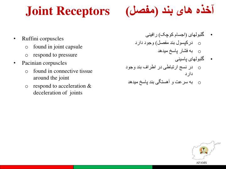 Joint Receptors