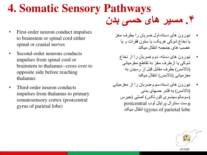 4. Somatic Sensory Pathways