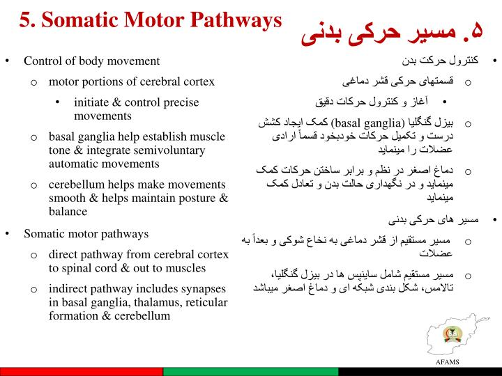 5. Somatic Motor Pathways