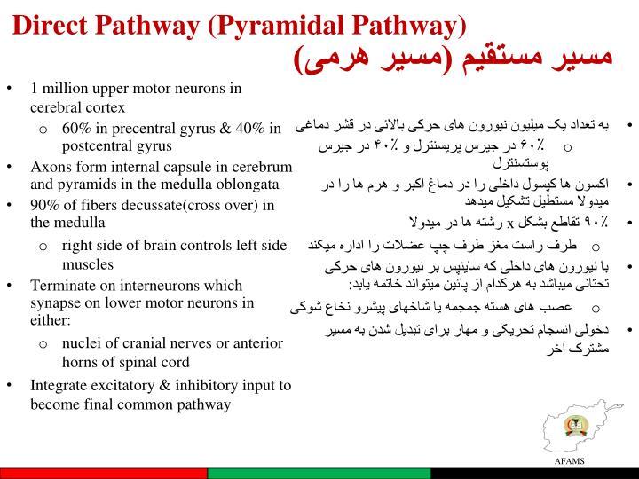 Direct Pathway (Pyramidal Pathway)