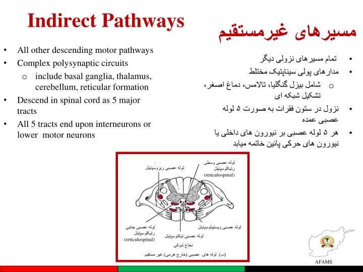 Indirect Pathways