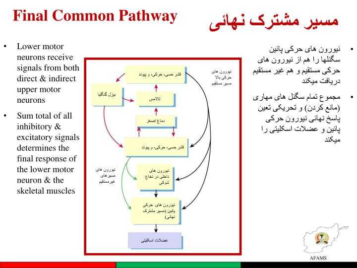 Final Common Pathway