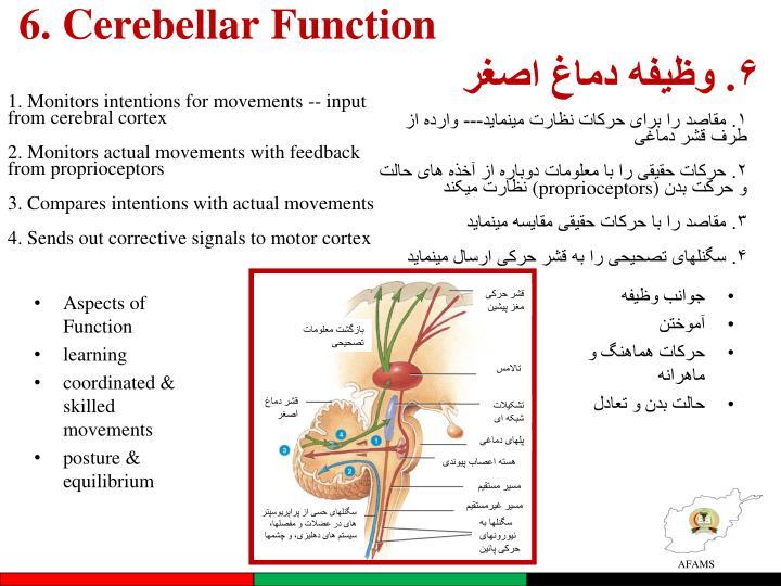 6. Cerebellar Function