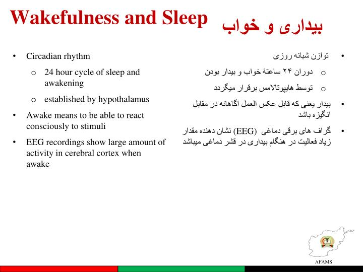 Wakefulness and Sleep