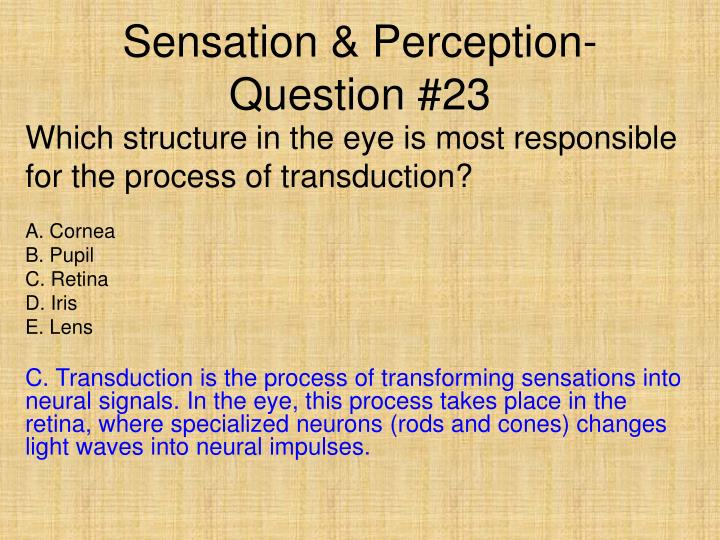 Sensation & Perception- Question #23