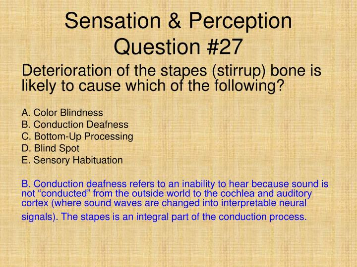 Sensation & Perception Question #27