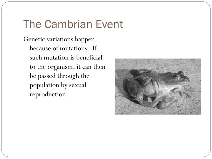 The Cambrian Event