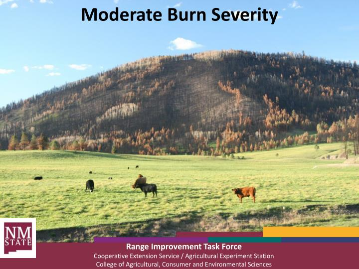 Moderate Burn Severity