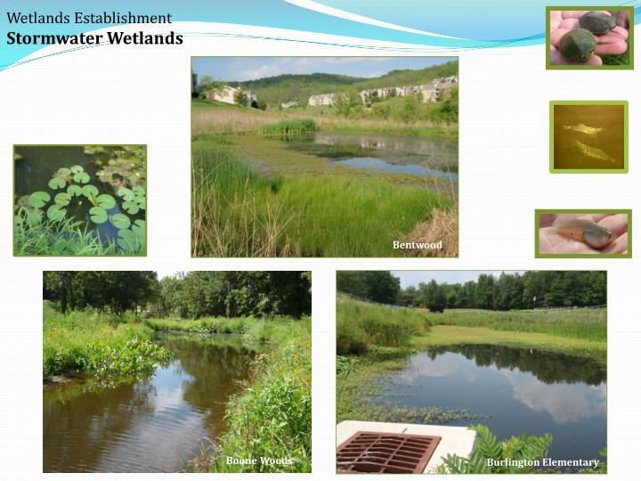Wetlands Establishment