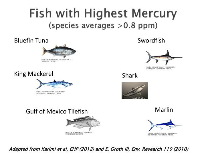 Fish with Highest Mercury