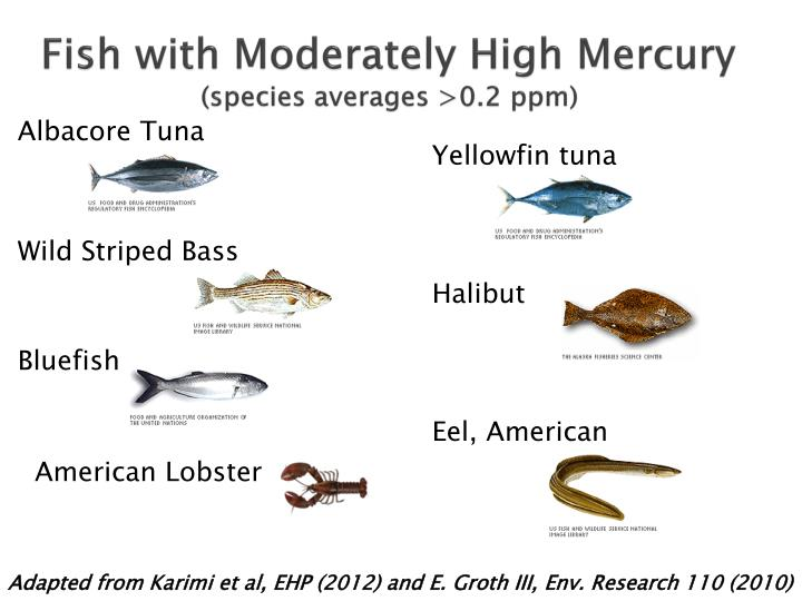 Fish with Moderately High Mercury