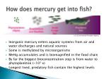 how does mercury get into fish