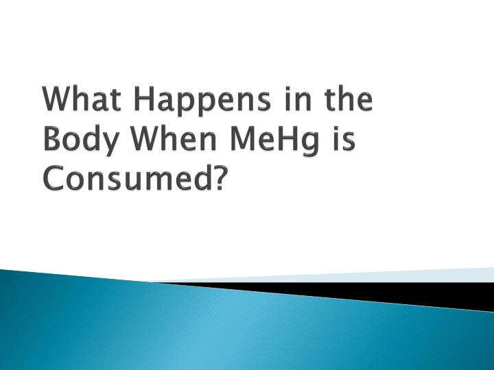 What Happens in the Body When MeHg is Consumed?