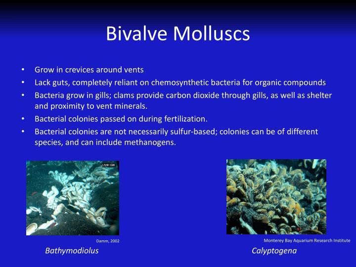 chemosynthesis sulfur bacteria