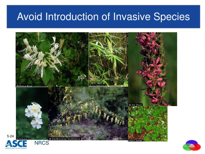 Avoid Introduction of Invasive Species
