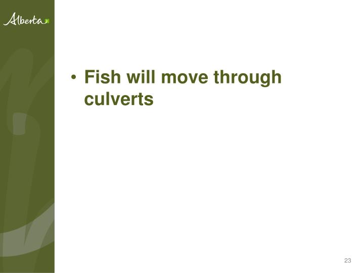Fish will move through culverts