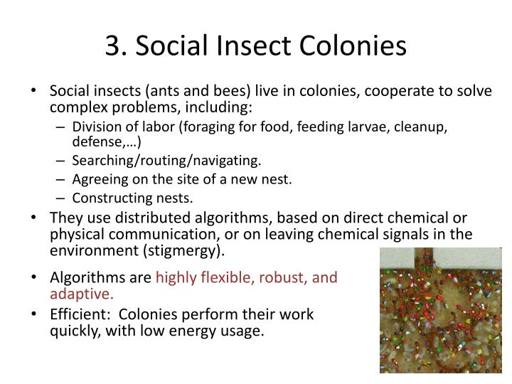 3. Social Insect Colonies